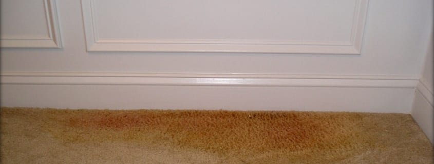REMOVING-PET-STAINS-FROM-YOUR-CARPET