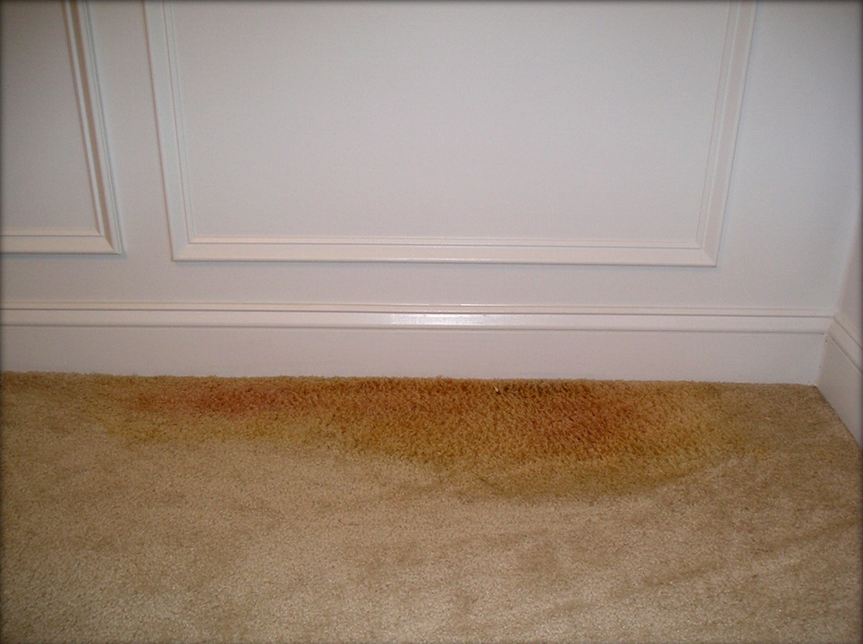 removing pet stains from your carpet kelly 39 s deep clean. Black Bedroom Furniture Sets. Home Design Ideas